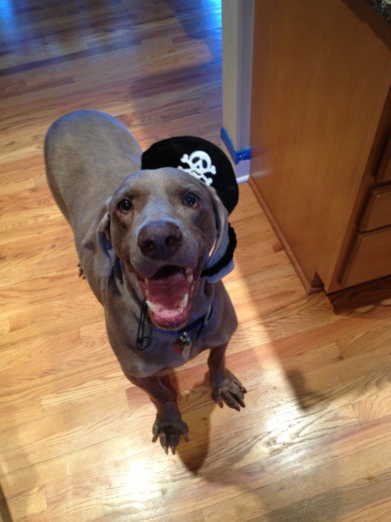 Duke Halloween Pirate